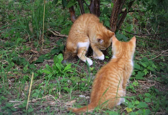 その後の子猫達_f0166234_17193252.jpg