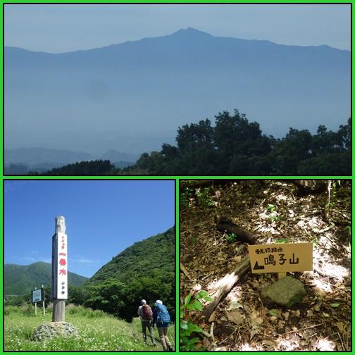 鳴子山のオオヤマレンゲ_e0164643_21132182.jpg