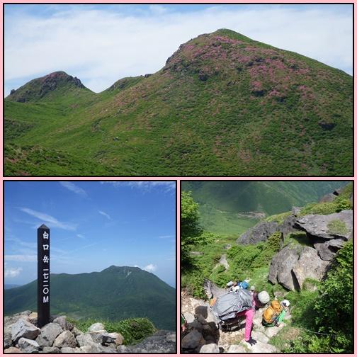 鳴子山のオオヤマレンゲ_e0164643_21582375.jpg