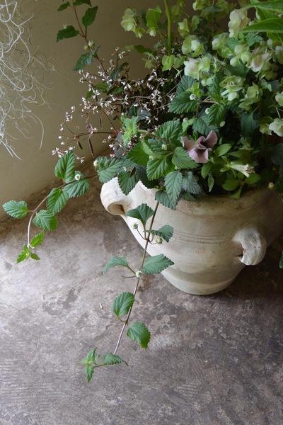 ご注文のお花たち。。。_a0229658_16562785.jpg