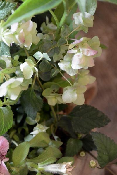 ご注文のお花たち。。。_a0229658_16572233.jpg