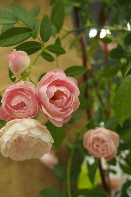第18回国際バラとガーデニングショー_b0017559_10591738.jpg