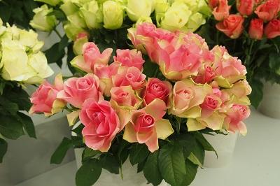 第18回国際バラとガーデニングショー_b0017559_10594339.jpg