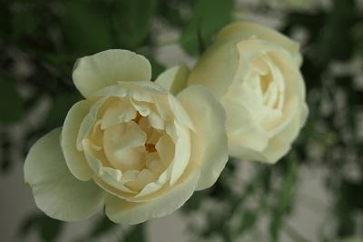 第18回国際バラとガーデニングショー_b0017559_105988.jpg