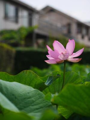 難波田城公園_a0027275_21581067.jpg