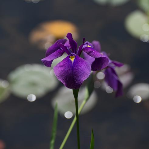 梅雨の合間のひと時は..._f0099102_22421561.jpg