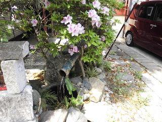 春のピンク色の花と竹筒の鹿威し(ししおどし)_e0310216_20135215.jpg