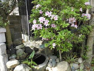 春のピンク色の花と竹筒の鹿威し(ししおどし)_e0310216_2074166.jpg
