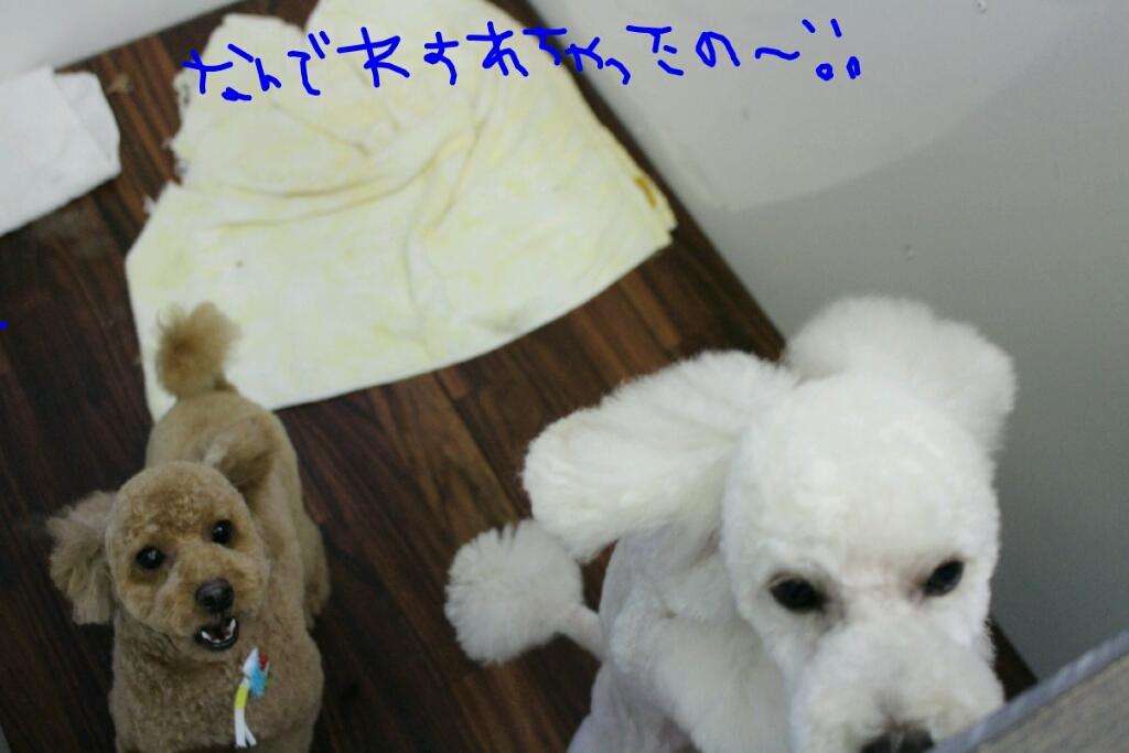 b0130018_20100970.jpg