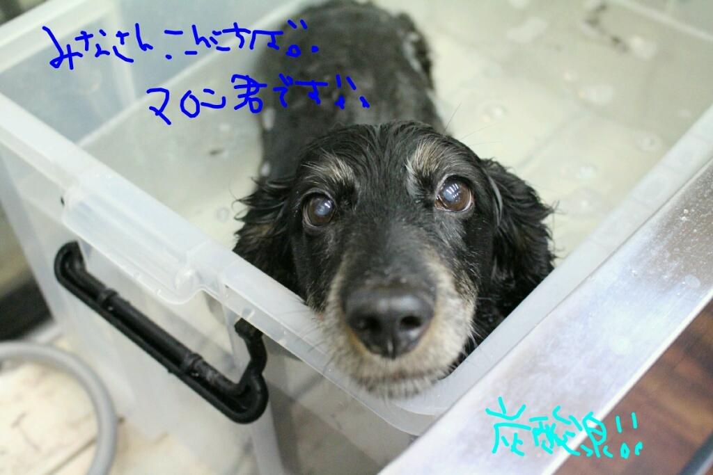 b0130018_20124688.jpg
