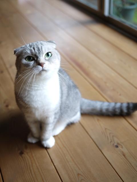 猫のお留守番 サラちゃん編。_a0143140_19154948.jpg