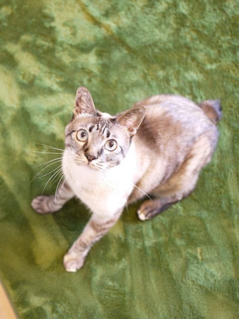 猫のお留守番 カン太くんルノーちゃん編。_a0143140_1973845.jpg