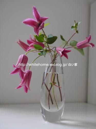 d0232840_15163713.jpg