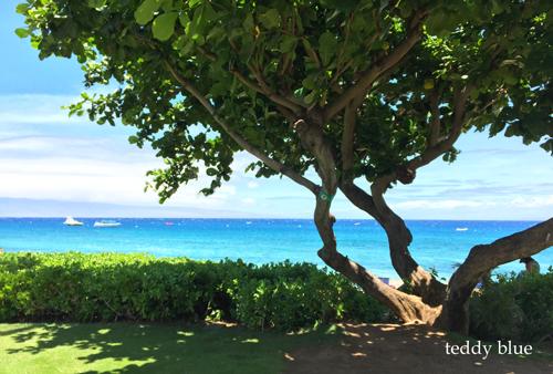 from Kaanapali, Maui  マウイ島 カアナパリ_e0253364_1020227.jpg