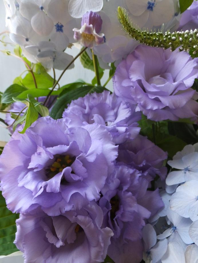 オークリーフ(父の日に贈る花)_f0049672_1742745.jpg