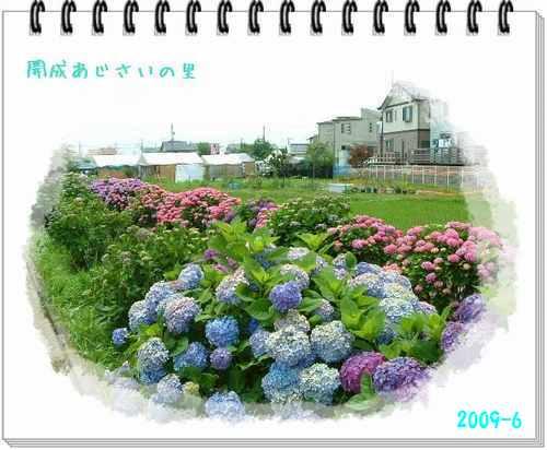 b0078675_956361.jpg