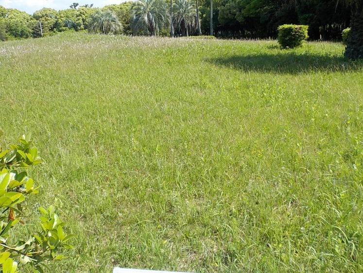 平成28年5月 東浜中央緑地の維持管理状況_d0338682_14101234.jpg