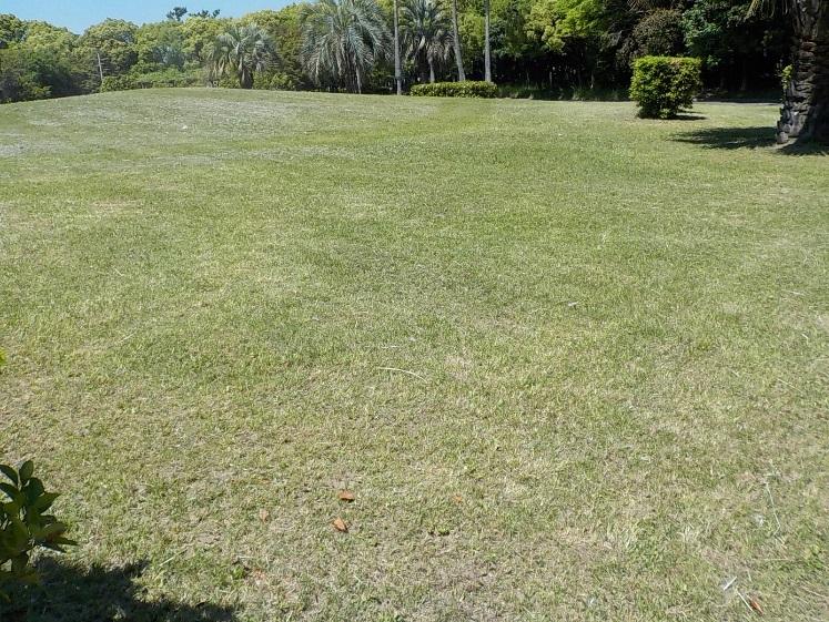 平成28年5月 東浜中央緑地の維持管理状況_d0338682_14151011.jpg