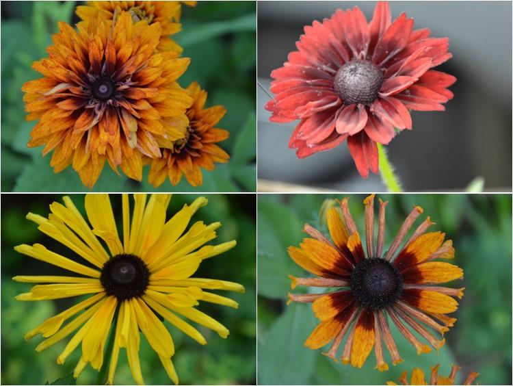 夏至の…6月21日の庭。_c0124100_23373013.jpg
