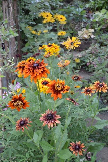 夏至の…6月21日の庭。_c0124100_2337988.jpg