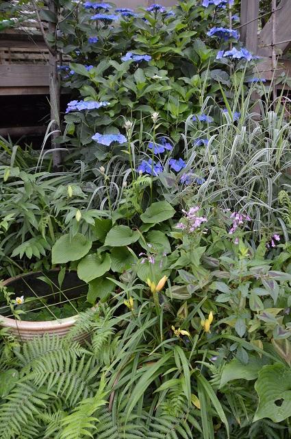 夏至の…6月21日の庭。_c0124100_23382558.jpg