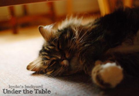 コーヒーテーブルの下で_b0253205_04311187.jpg