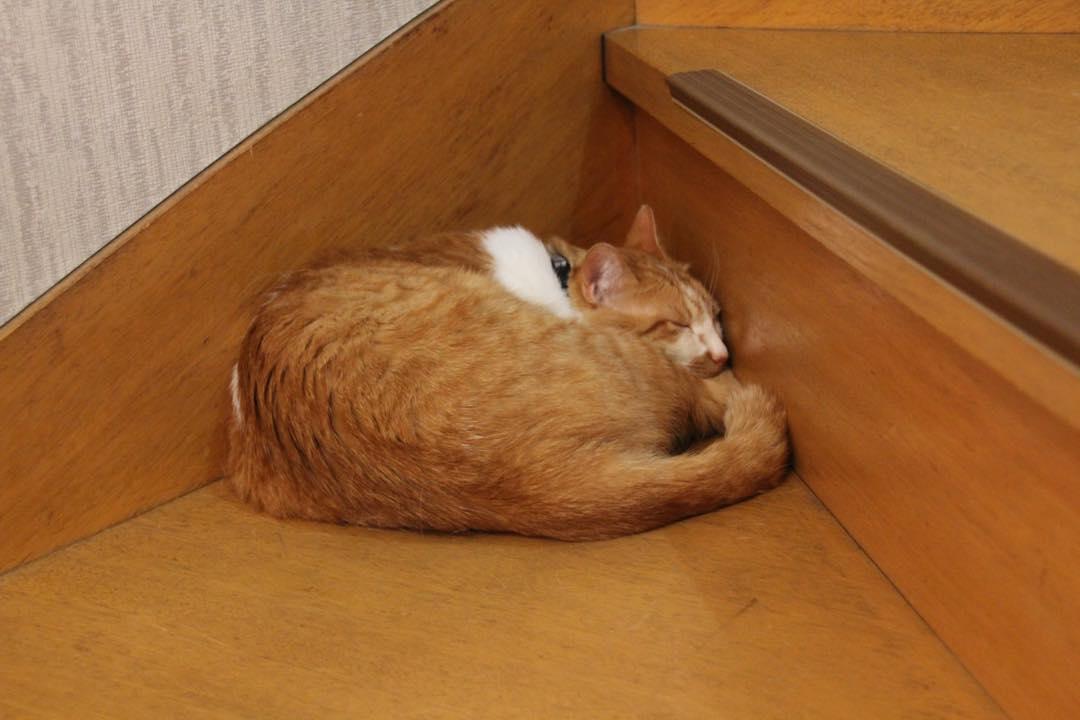 【猫】隅っこで_f0141609_2355246.jpg