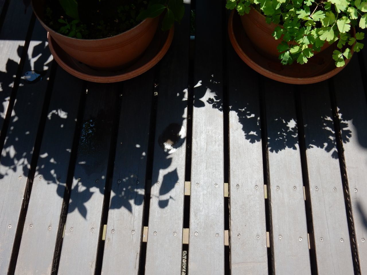 夏至 晴れ 2週間ぶりの25℃ 1日遅れのストロベリームーン_c0025115_22073898.jpg