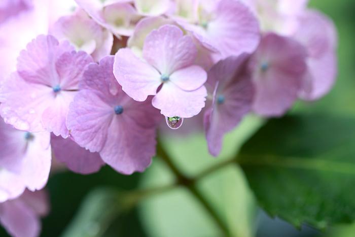 雨の季節でも写真でhappyに!気分が上がる6月のすてきショットの楽しみ方!_d0350330_14060419.jpg