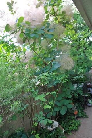 ◆Rochetさんの庭_e0154682_21315031.jpg