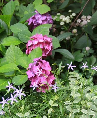 ◆Rochetさんの庭_e0154682_21332268.jpg