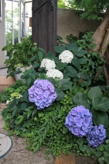 ◆Rochetさんの庭_e0154682_21344843.jpg
