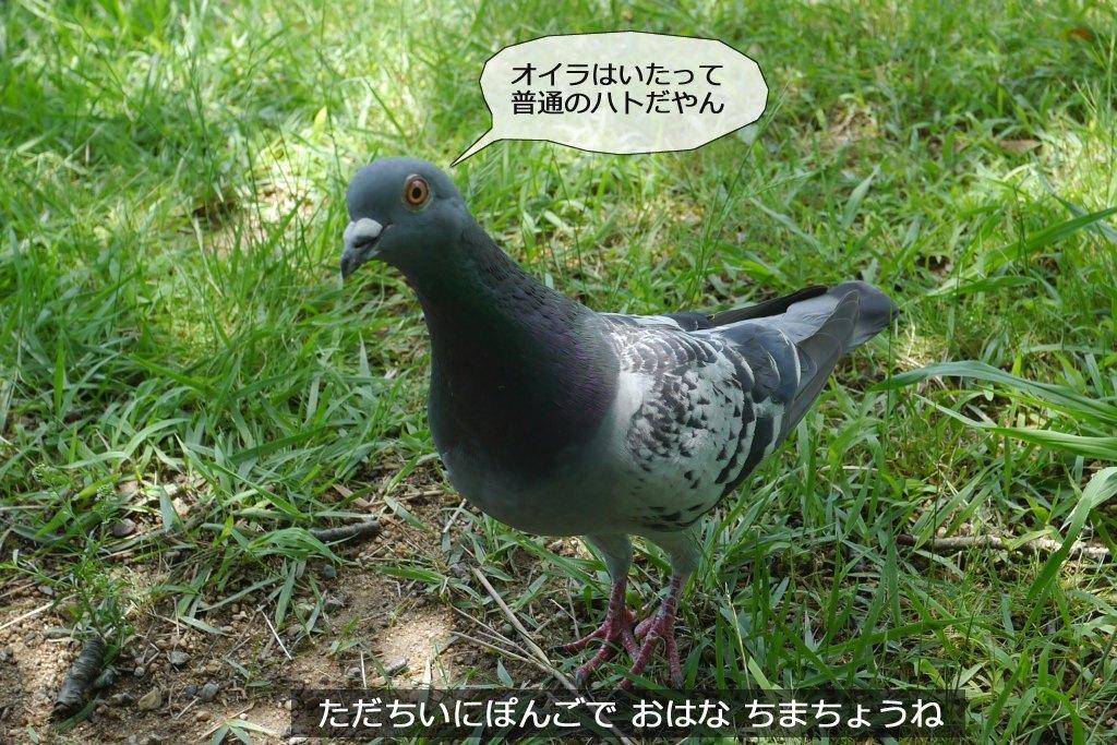b0174191_20125625.jpg