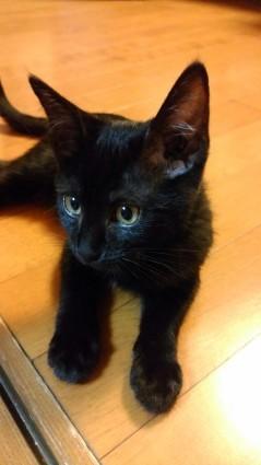 黒猫くっく二世_f0168392_01034782.jpg