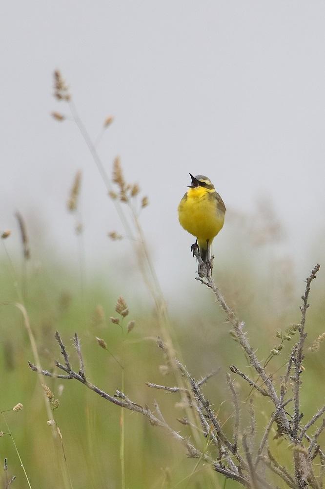 遠征 3・・・・・・・道東の小鳥たち その1_c0295707_1762623.jpg