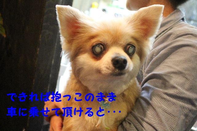 楽しみすぎる~!!_b0130018_15584136.jpg