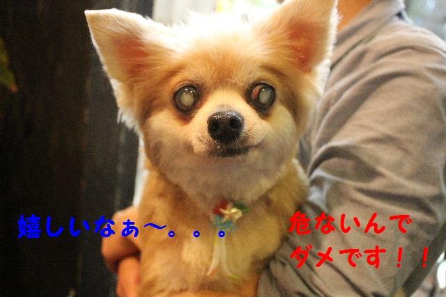 b0130018_15584815.jpg