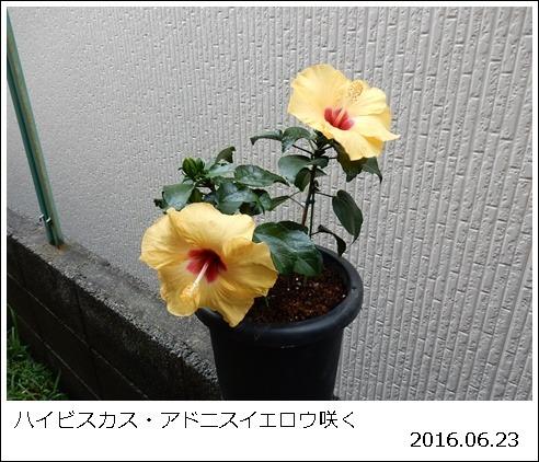 e0033229_1751515.jpg