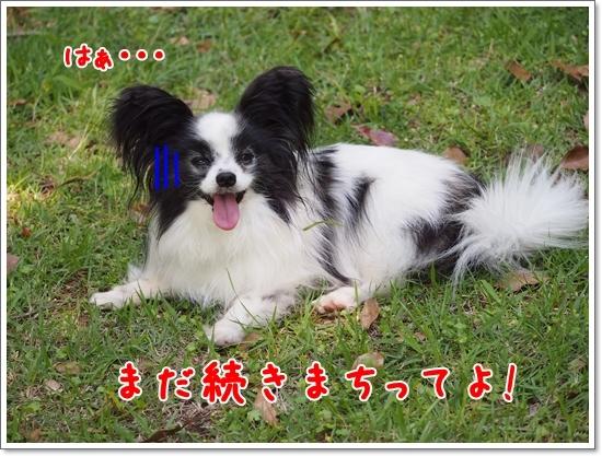 d0013149_00290593.jpg