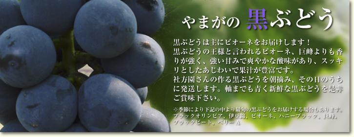 熊本ぶどう 高級種なしぶどう「山鹿のぶどう」 先行予約受付スタート!今年も7月7日より出荷いたします!_a0254656_1923375.jpg