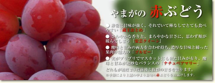 熊本ぶどう 高級種なしぶどう「山鹿のぶどう」 先行予約受付スタート!今年も7月7日より出荷いたします!_a0254656_199916.jpg