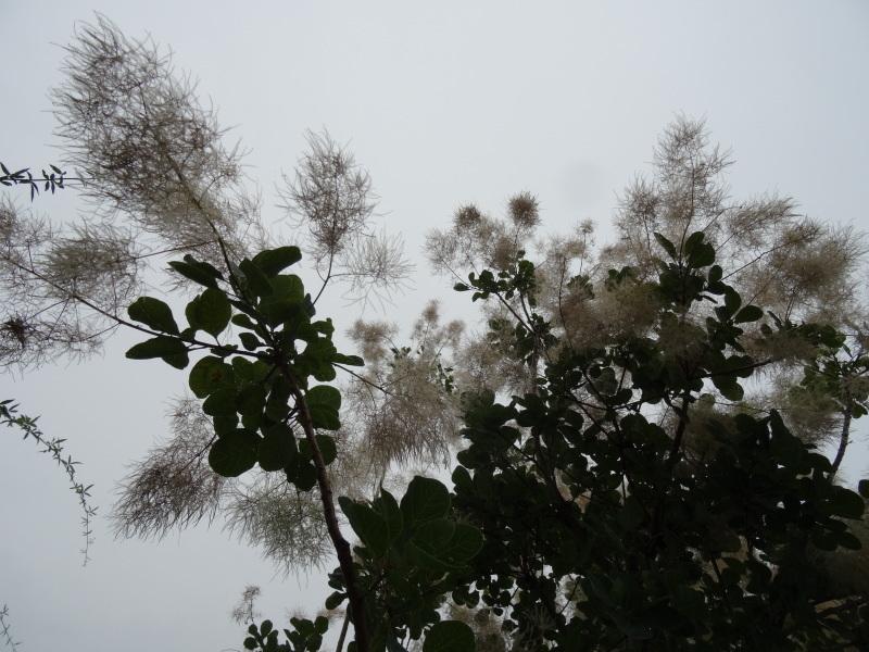今年の梅雨は真面目に働く・・・今日も雨である_c0108460_17403117.jpg