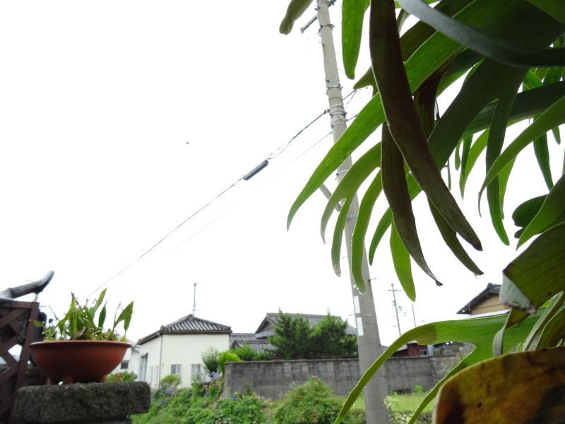 今年の梅雨は真面目に働く・・・今日も雨である_c0108460_17404169.jpg