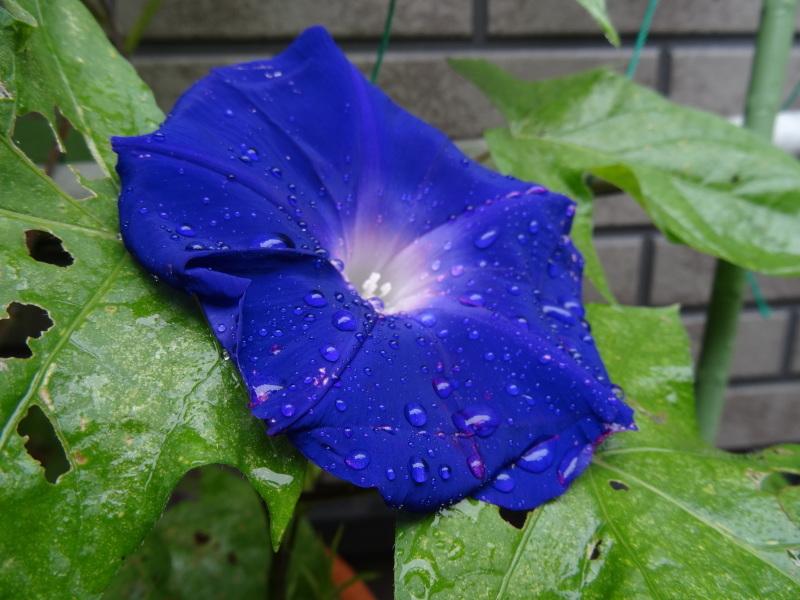 今年の梅雨は真面目に働く・・・今日も雨である_c0108460_17404662.jpg