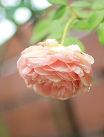 ◆雨の日_e0154682_21023853.jpg