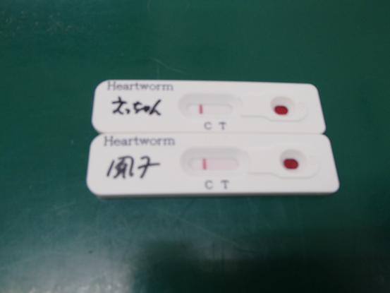混合ワクチン接種と血液検査_f0064906_1811846.jpg