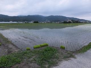 田植え in 福岡_f0238106_23343119.jpg
