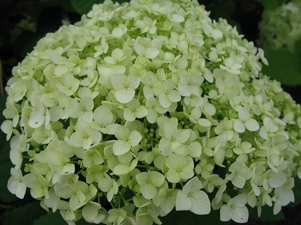 白 緑 白_f0129726_21071518.jpg