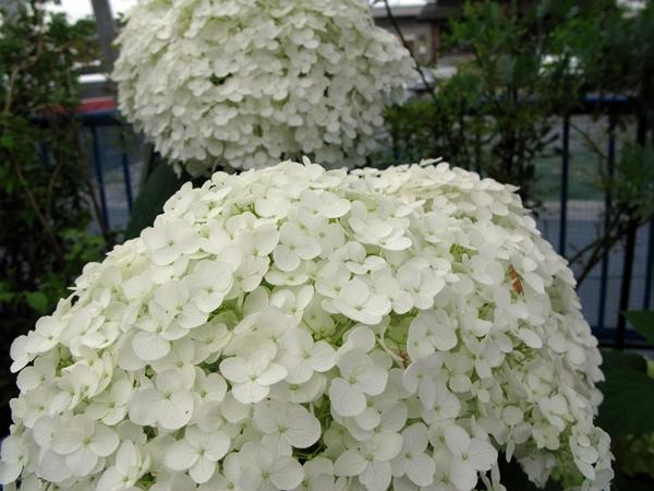 白 緑 白_f0129726_21112393.jpg