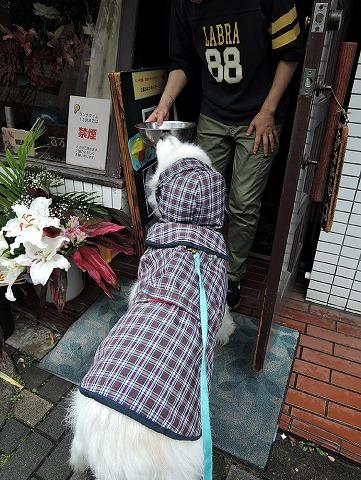 梅雨ですねえ_c0062832_9504463.jpg